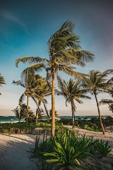 Paradiesstrand mit palmen in tulum, quintana roo, mexiko.