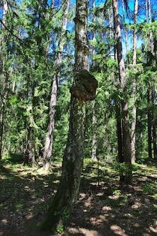 Park belovezhskaya pushcha im belarussischen land