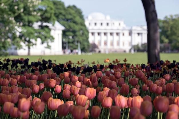 Park der tulpen im frühjahr auf elagin-insel, elaginoostrovsky-palast, st. petersburg.