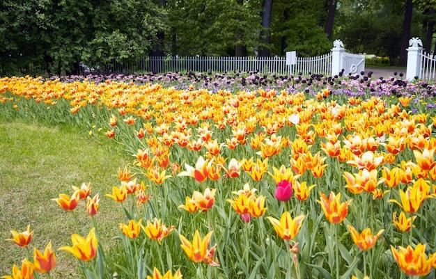 Park der tulpen im frühjahr auf elagin-insel, st. petersburg.
