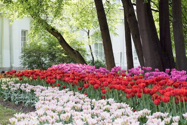 Park des tulpenfestivals im frühjahr auf elagin-insel, st. petersburg.
