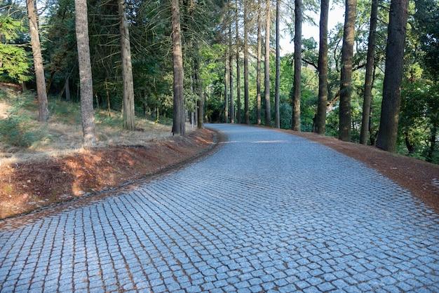Park mit bäumen und einem langen, geschwungenen kopfsteinpflasterweg im herbst bergauf