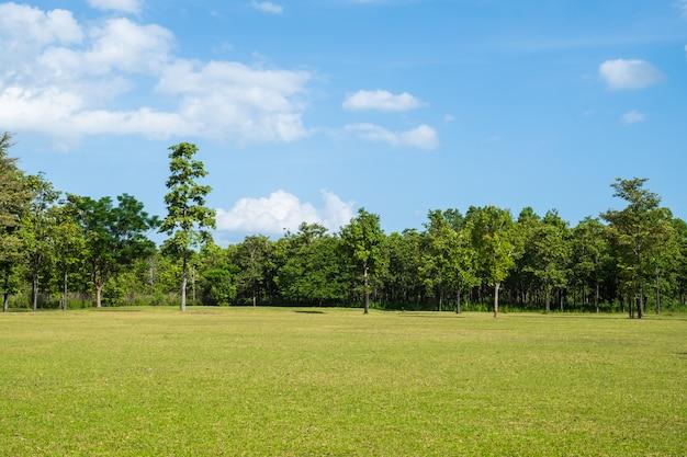 Park mit grüner rasenfläche