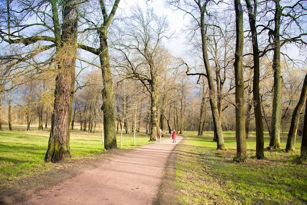 Park mit hohen bäumen, grünem gras und weg, blauer himmel, menschen in ferne