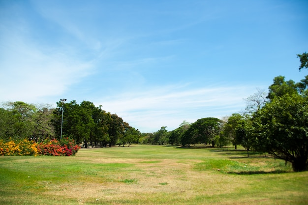 Parks und heller himmel.