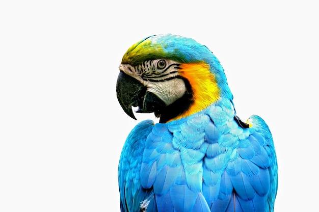 Parrot profil