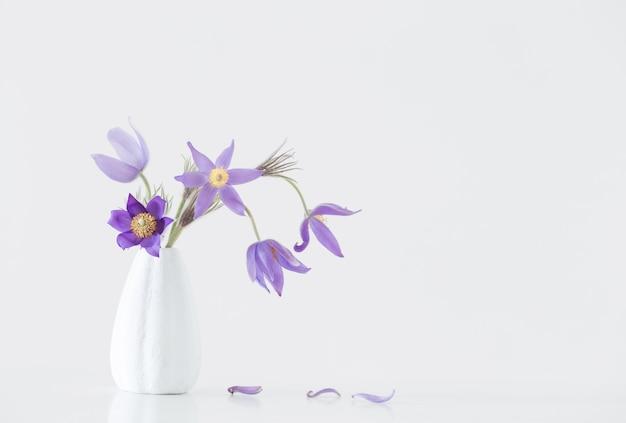 Pasque-blume in vase auf weißer oberfläche