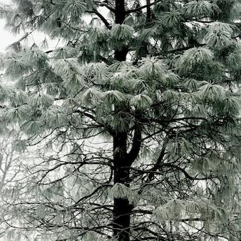 Pastellgrüner baum mit schneebedeckten zweigen