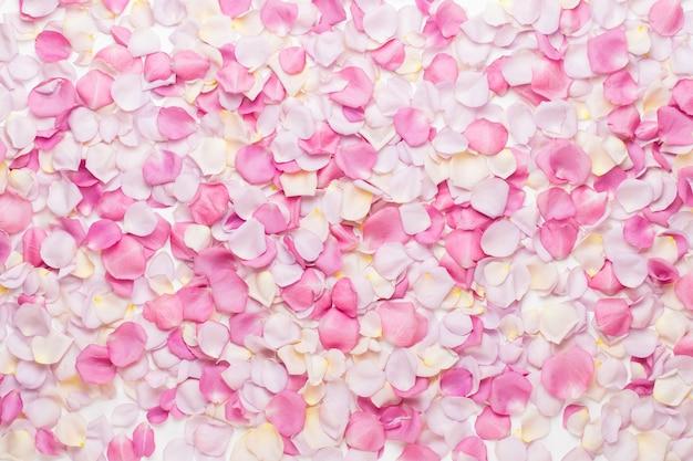 Pastellrosenblütenblütenblätter auf weiß.