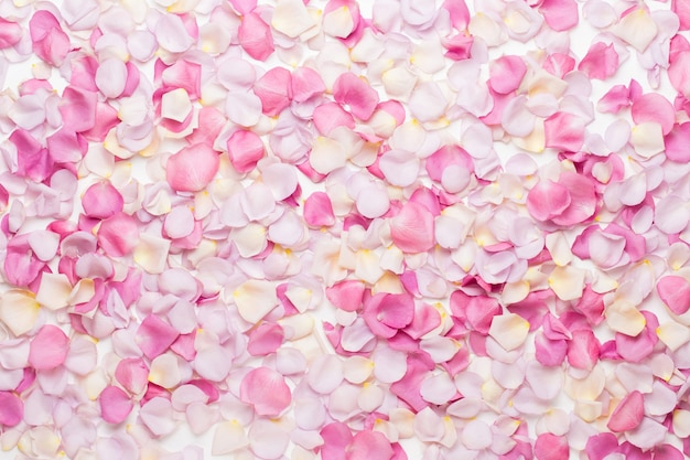 Pastellrosenblütenblütenblätter auf weißem hintergrund. flache lage, draufsicht.