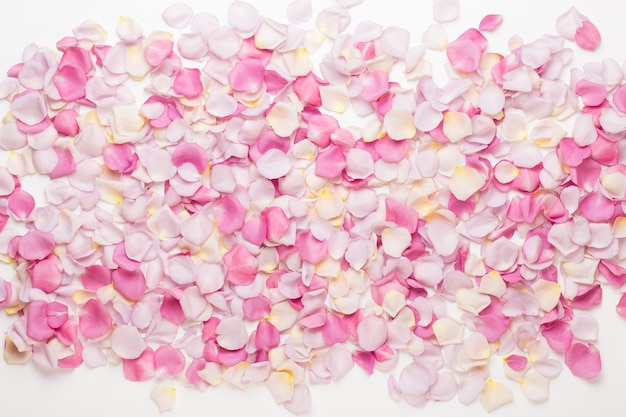 Pastellrosenblütenblütenblätter auf weißer flacher lage, draufsicht, kopienraum.