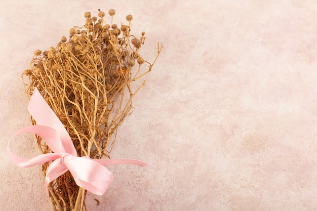 Peganum harmala pflanze getrocknet auf der rosa tischpflanze farbfoto baum