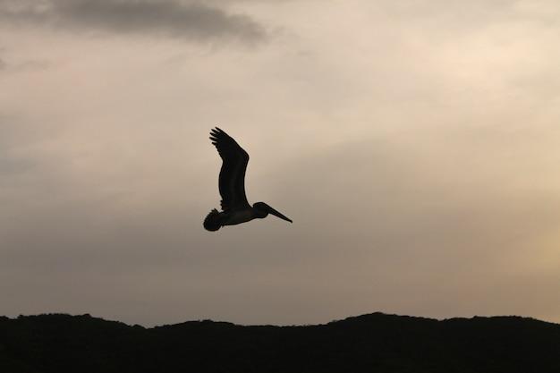 Pelikane verabschieden sich bei sonnenuntergang