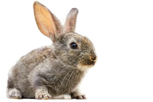 Pelziges niedliches kaninchen lokalisiert