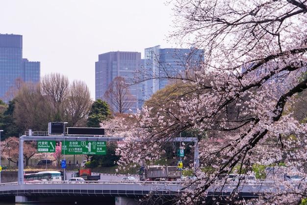 Pendler fahren in der kirschblütenzeit zum tokyo expressway.
