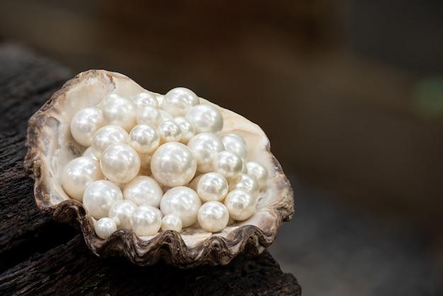 Perle auf muschel und.