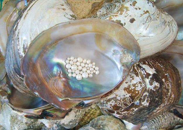 Perle mit auster