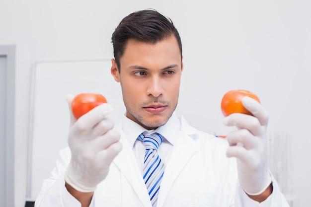 Perplex wissenschaftler, der zwei tomaten hält