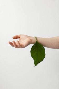 Person, die ein grünes blatt hält