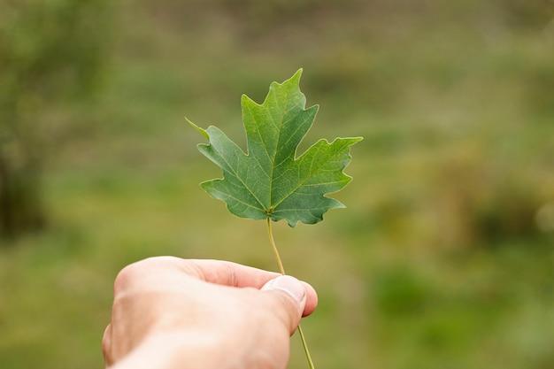 Person, die ein vibrierendes grünes blatt anhält