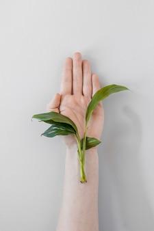 Person, die eine pflanze auf weißem hintergrund hält
