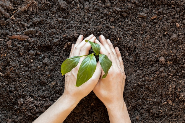 Person, die etwas in den boden pflanzt