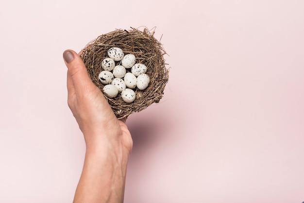 Person, die nest mit wachteleiern hält