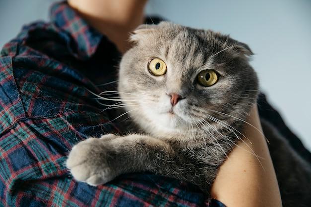 Person, die schottische katze umfasst