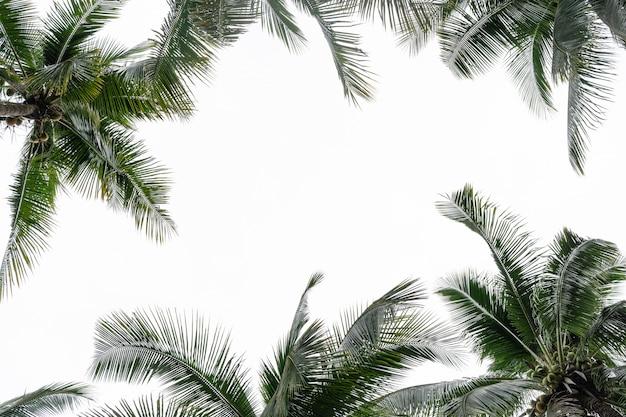 Perspektivische ansicht der kokospalmen mit kopienraum.