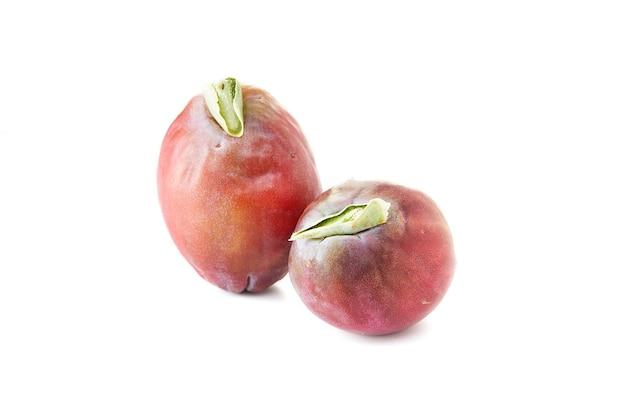 Peruanische apfelkaktusfrucht lokalisiert auf weißem hintergrund. wissenschaftlicher name cereus repandus.