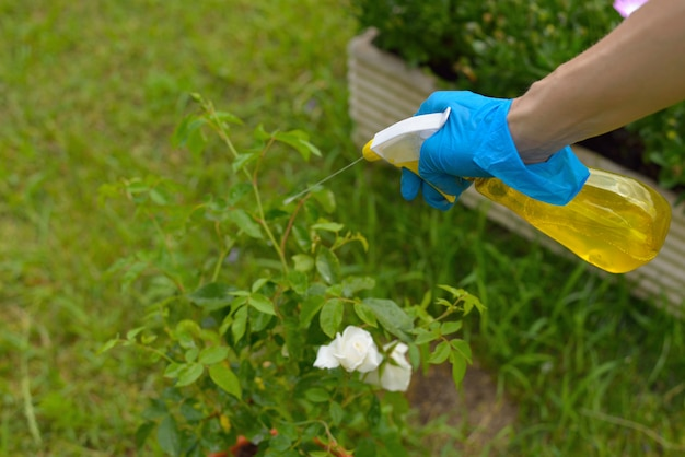 Pestizidspray