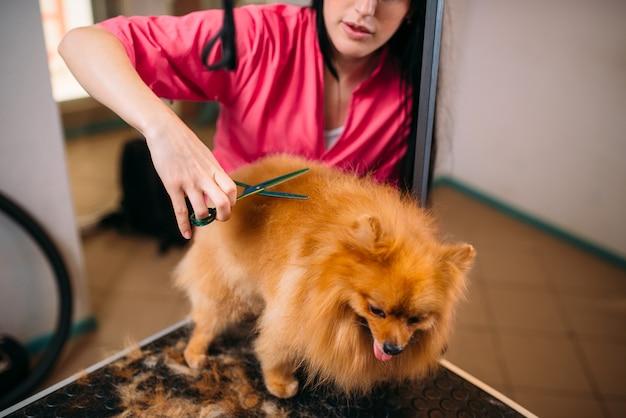 Pet groomer macht pflege hund