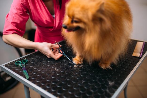 Pet groomer schneidet mit scherenkrallen eines hundes