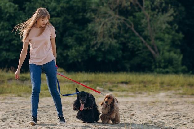 Pet walker, der mit cocker spaniel hunden spazieren geht