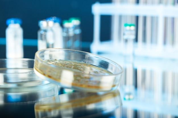 Petrischale mit bakterienkolonien auf sockel, nahaufnahme