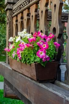 Petunien hängen von einem balkon. topf petunien hängen von einem balkon mit einem holzgeländer
