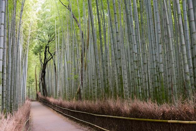 Pfad innerhalb des bambushains in arashiyama, kyoto