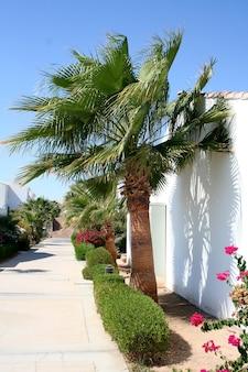 Pfad und palmen auf dem territorium des hotels sheraton in ägypten