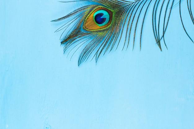 Pfauenfeder auf blauem hölzernem