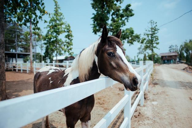 Pferd am reiterhof