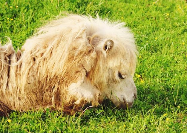 Pferd auf dem gras, sommerzeit