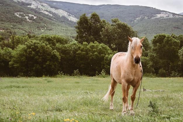 Pferd auf dem lande