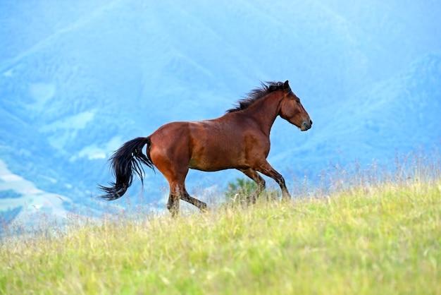 Pferd auf der weide im sommer in den bergen