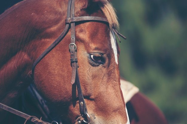 Pferd auf die natur