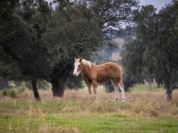 Pferd auf einem feld