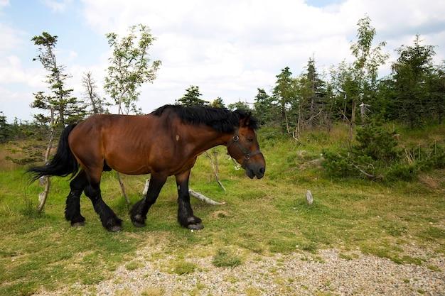Pferd auf einer lichtung