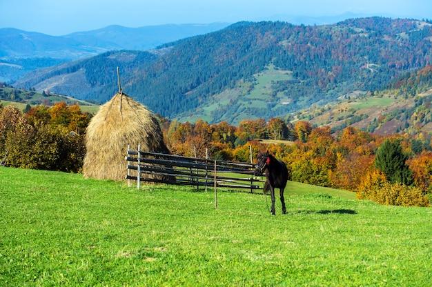 Pferd auf einer weide in den bergen im herbstkarpaten