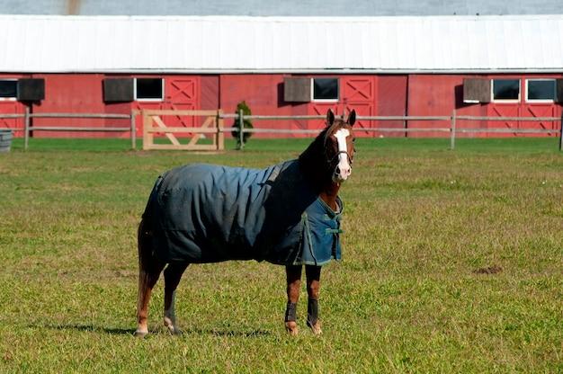Pferd auf einer weide in den hamptons