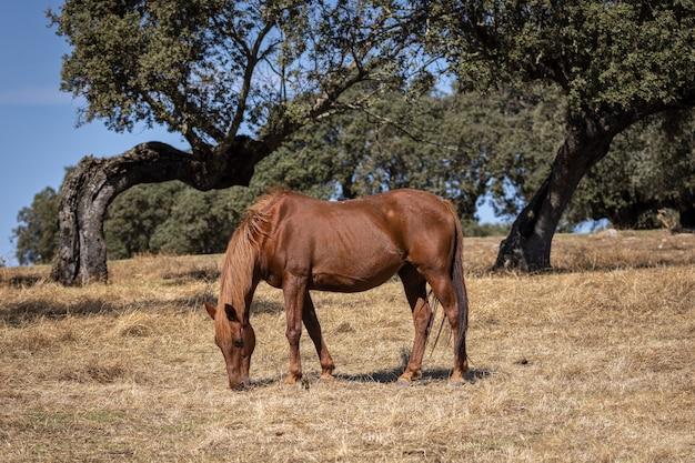 Pferd, das auf dem feld weidet