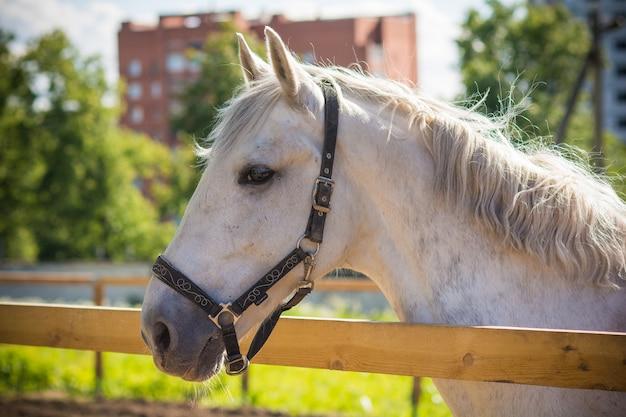 Pferd, das auf einer weide mit gras weidet
